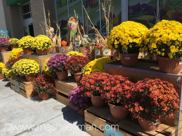 flowers-in-front-of-store