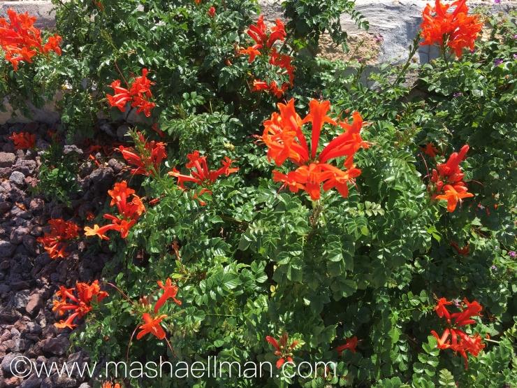 Red fall flowers.jpeg