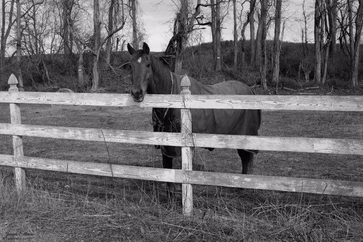 joseph-horse