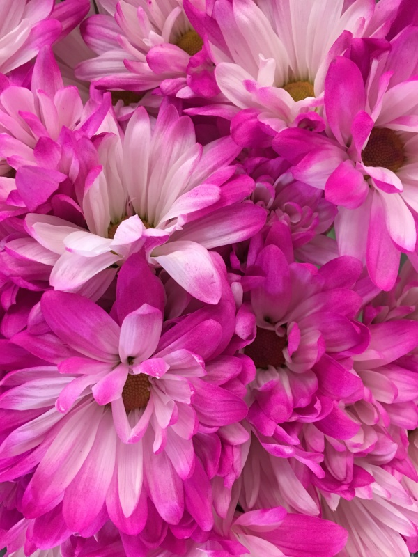Pink flowers.jpeg