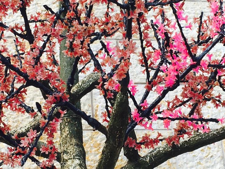 tree-pink-flowers