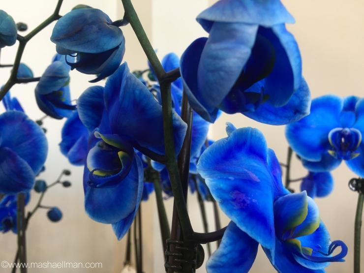 Blue flower.jpeg