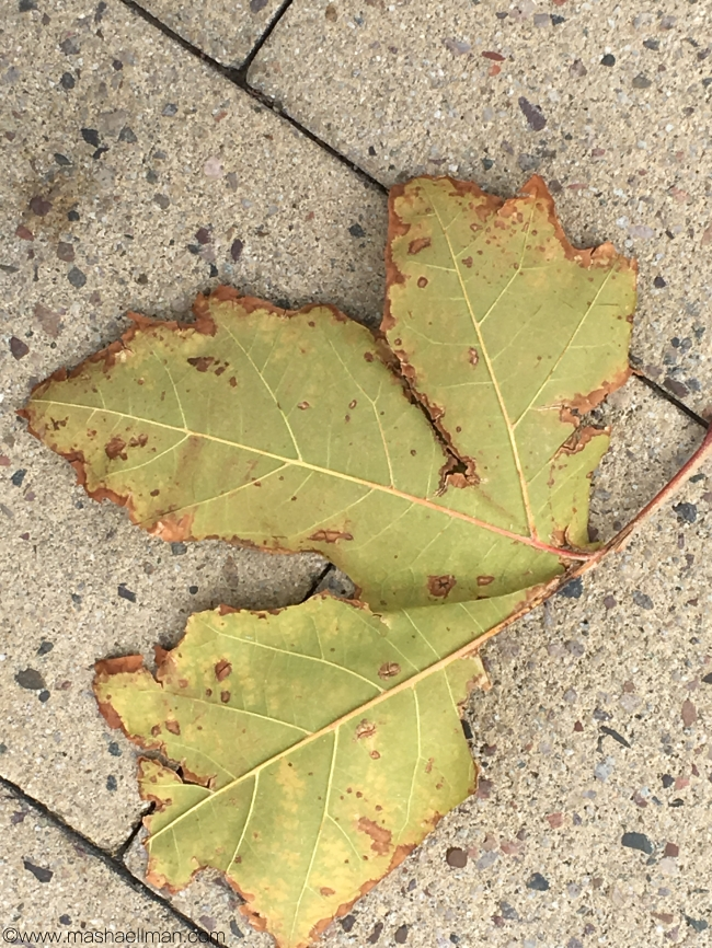 Leaf on ground.jpeg