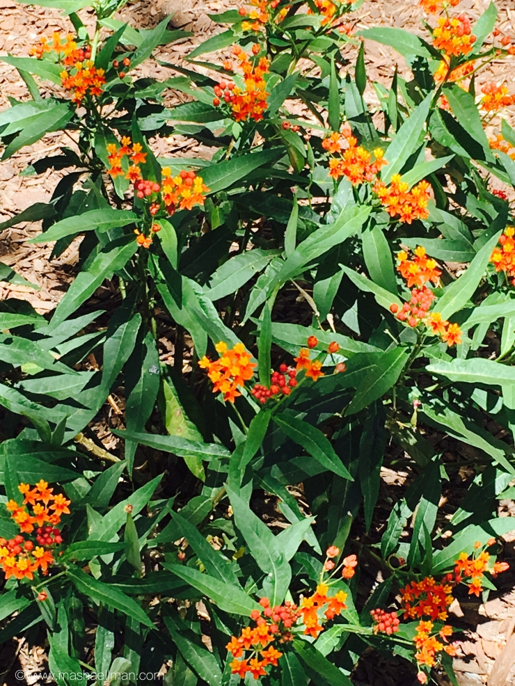 Orange little flowers.jpeg