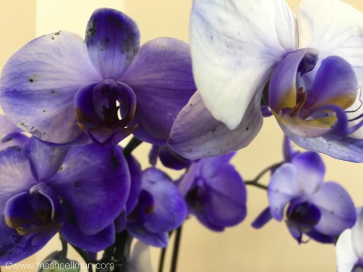 Orchid purple.jpeg