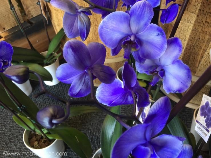 Orchid purple2.jpeg