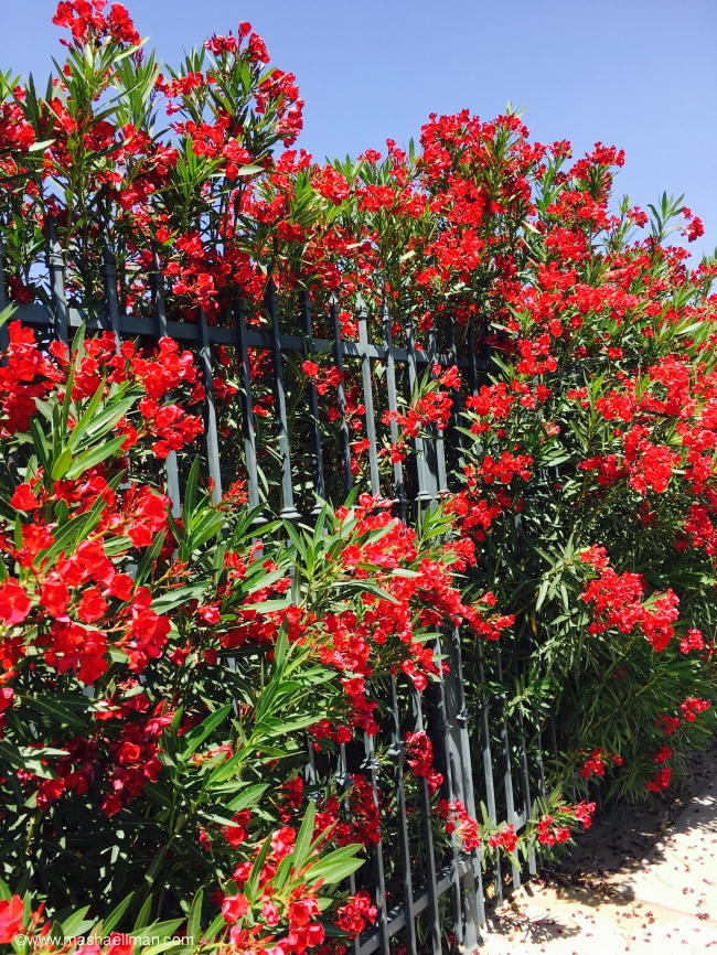 Red flowers gate.jpeg