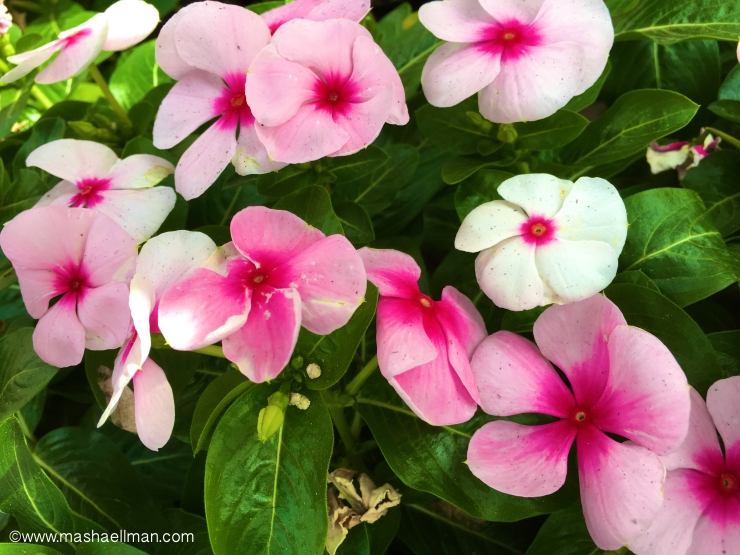Pink summer flowers.jpeg