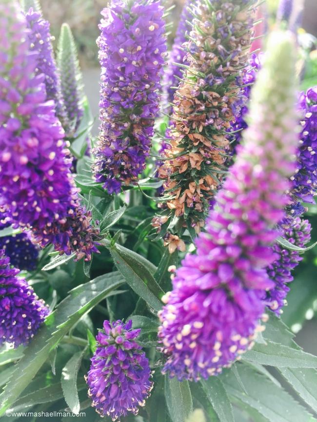 Purple 2.jpeg