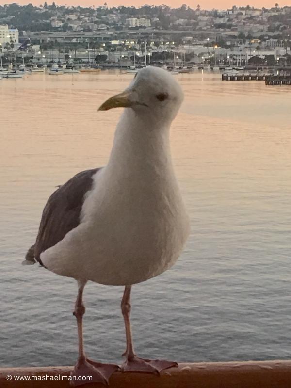 sea gull 2