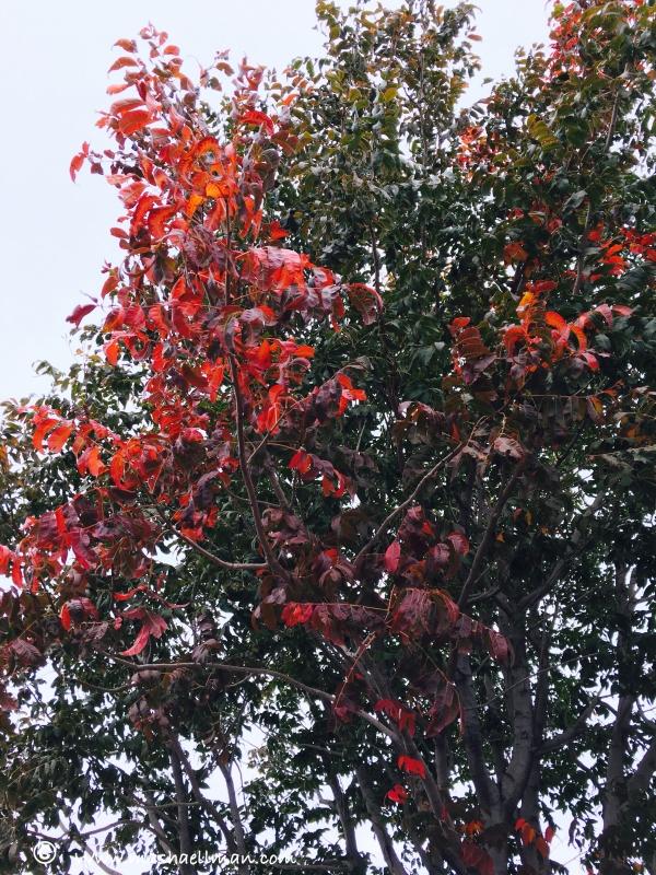 tree re leaves.jpeg