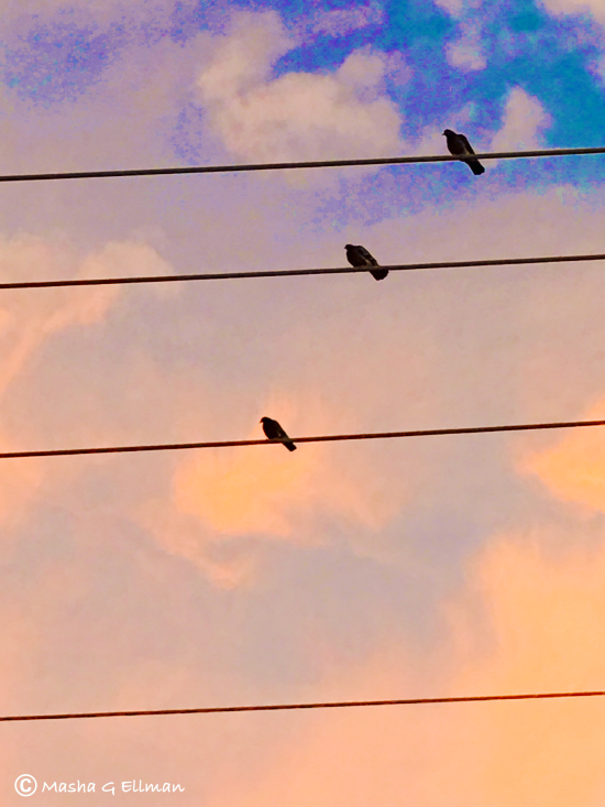 birds on wire3