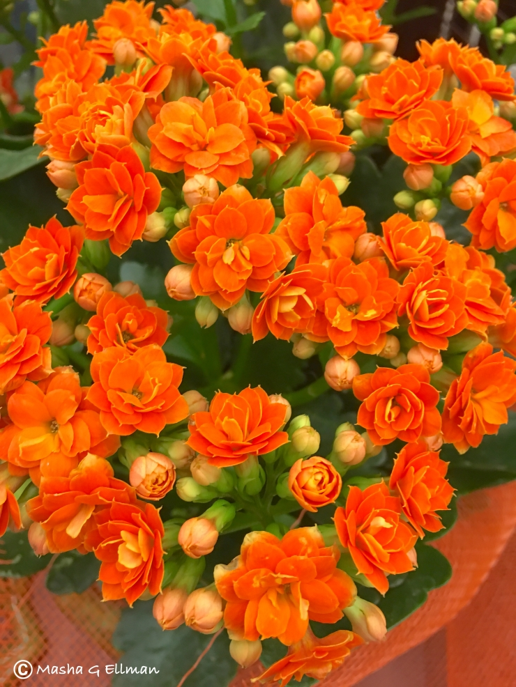flowers orange3