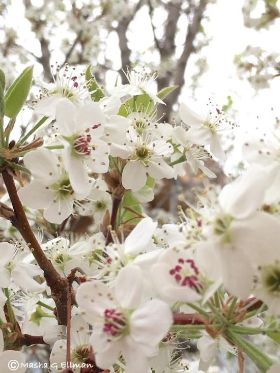 tree flower4