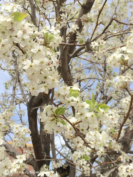 tree flower5