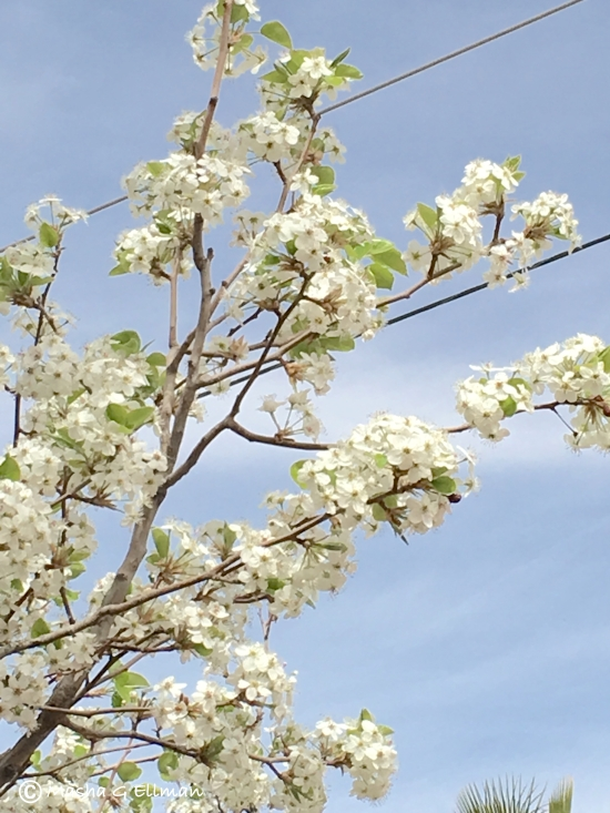 tree flower6