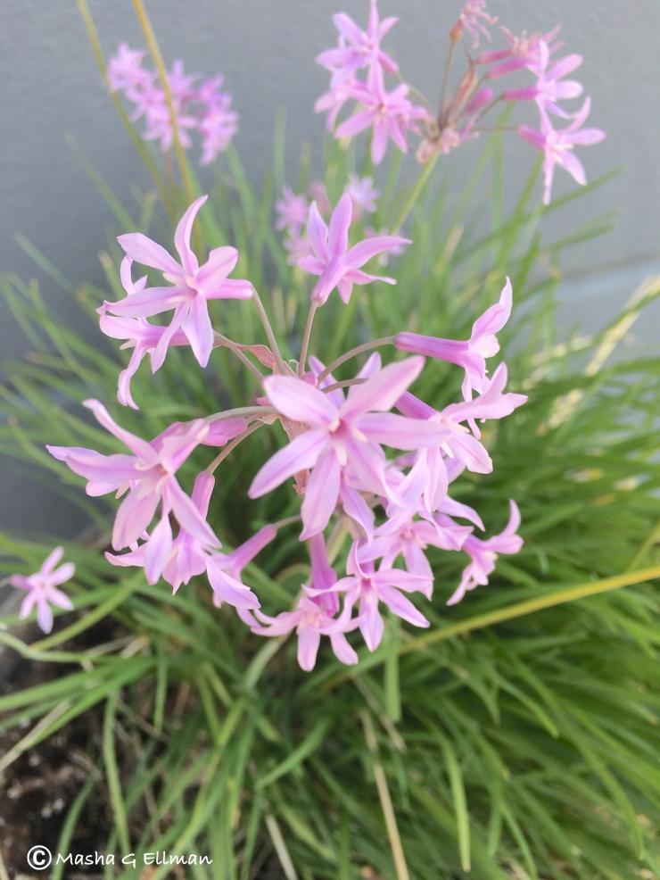 flower pink (1)